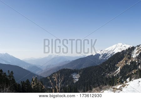 winter forest with white snowy mountains under the blue sky