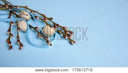 Willow Seals With Quail Eggs On Blue Background