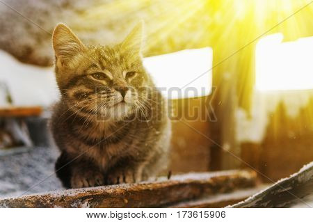 Lovely fluffy kitten basking in the rays of spring sun.