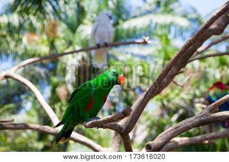 green parrot bird on wood branch greenery
