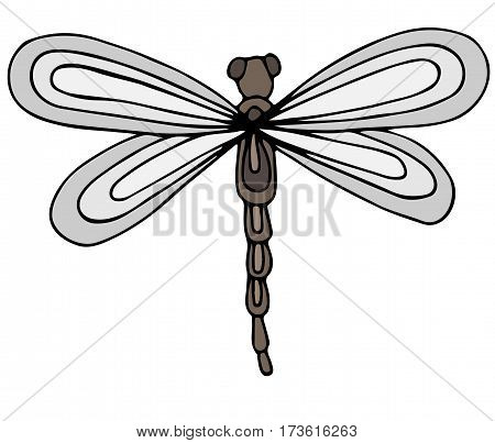 Cute colorful dragon fly isolated on the white background. For coloring book and other child design