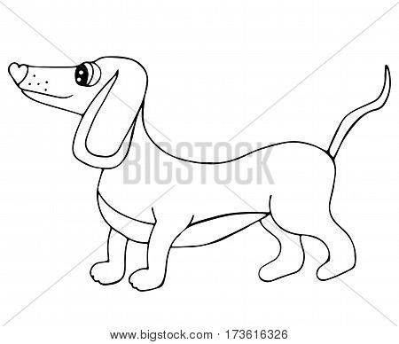 Cute dachshund dog isolated on the white background. For coloring book and other child design.