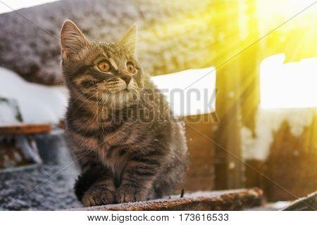 Lovely fluffy kitten basking in the rays of spring sun.