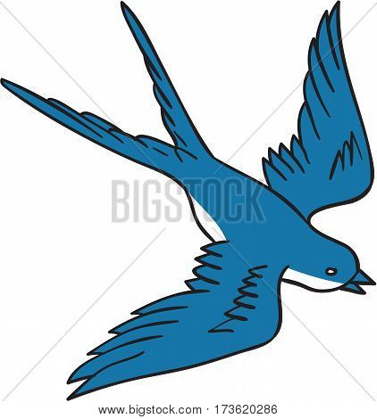 Drawing sketch style illustration of a swallow a fast flying passerine bird in the family Hirundinidae flying down viewed from the side set on isolated white background.