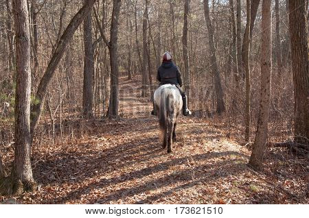 Horse and rider heading home thru autumn woods on leaf covered trail