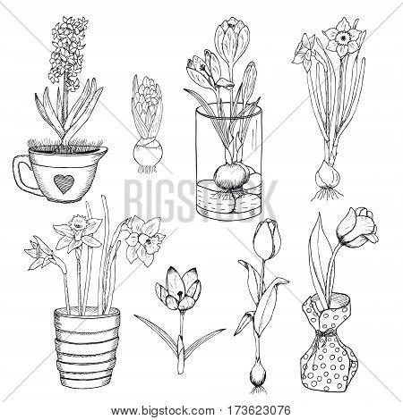 Hand drawn spring flowers set with crocus narcissus tulip hyacinth in and without pots isolated vector illustration