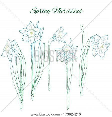 Colorful hand drawn flowers concept with blooming natural narcissus on white background vector illustration