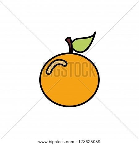 colorful orange fruit icon stock, vector illustration design