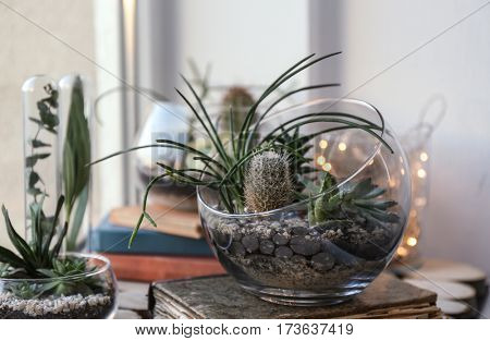 Mini succulent garden in glass terrarium on old book