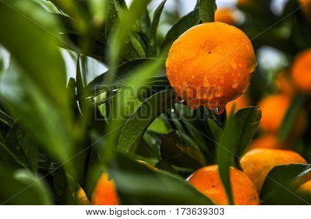 The orange fruit close up in autumn