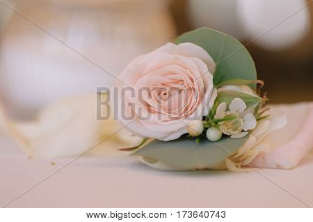 Rose bud in tenderless boutonniere, with green petals and small buds, closeup