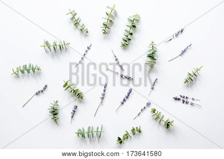 Floral pattern with lavander and eucalyptus for spring design on white background top view