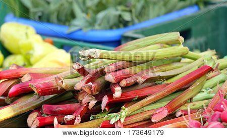 Bunch of Rhubarb Stalks Vegetables at Farmers Market