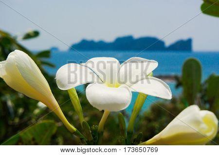Hill Garden Idyllic Blossom