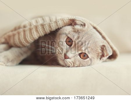 Cute cat wrapped in warm sweater lying on sofa