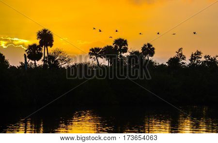 A flock of ibis flying over the palm trees in the sunrise on the Florida Intracoastal Waterway