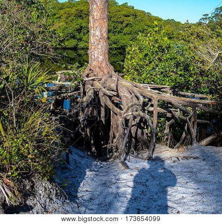 The shadow of the photographer in the sand as she takes the photo of exposed tree roots from erosion on the river's edge
