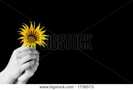 giving flower image photo free trial bigstock