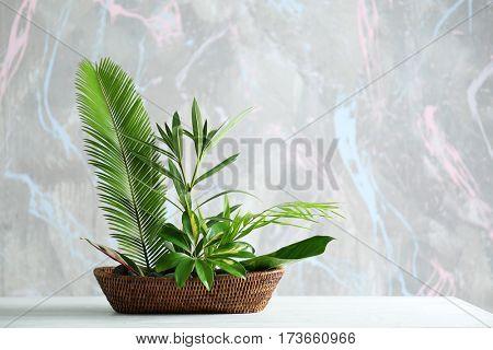 Plant arrangement on a color background