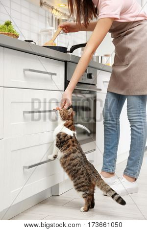 Young woman feeding cute cat while cooking in kitchen