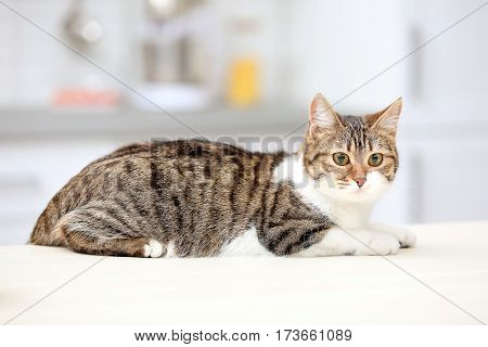Cute cat lying on table against blurred background