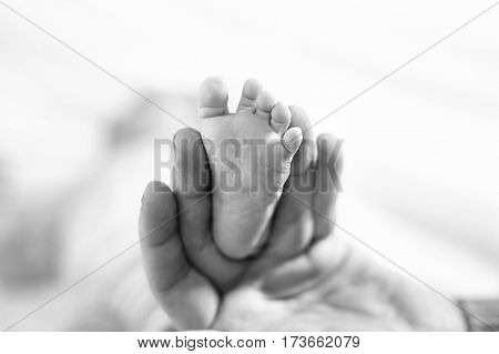 Father or mother holding foot of newborn baby. Adult hand and baby tiny baby feet. Happy parenthood, carefree childhood, family, love, tenderness. In black-and-white, monochrome