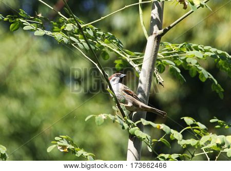 a single small brown sparrow on a tree