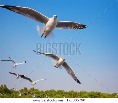 Seagull Flying With Sky At Bangpu, Thailand