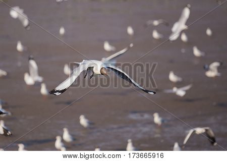Seagull Flying With Sea