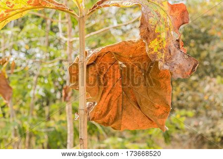 Autumnal tree branch with dry leaves .