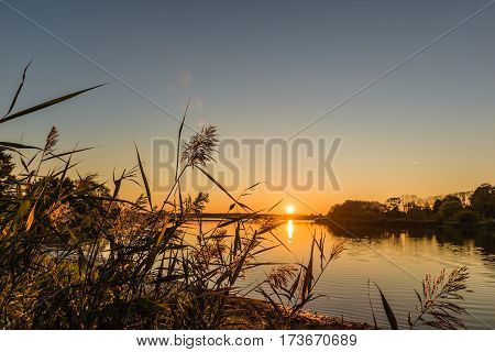 Evening on the lake. Reed and trees illuminated by sunbeams of a sunset.