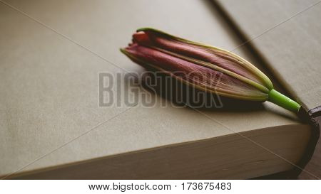 Morning relaxation and cozy with pre blooming red lilly on dark gold book with copy space for woman lifestyle nostalgic concept