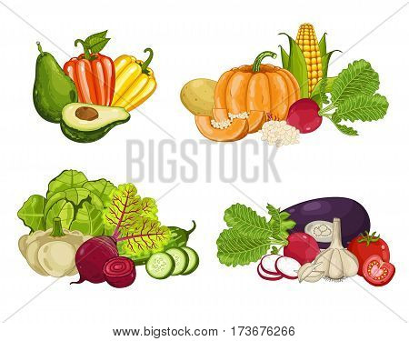 Fresh organic vegetable composition isolated vector illustration. Locally grown food, vegetarian nutrition, organic healthy diet. Natural vegetable set with pepper, cabbage, zucchini, carrot, pumpkin
