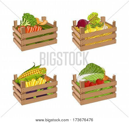 Wooden box full of vegetable set isolated vector illustration. Fresh vegetable, organic farming, delivery farm product, grocery store. Corn, pepper, radishes, eggplant, tomato, cabbage in wooden crate