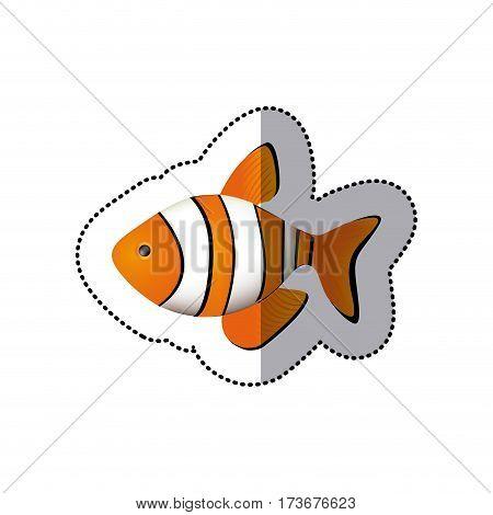 sticker colorful picture clownfish acuatic animal vector illustration
