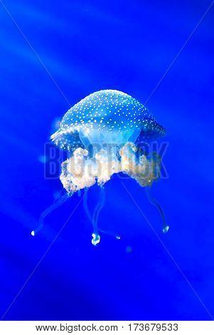 Jellyfish swimming in the ocean vertical image