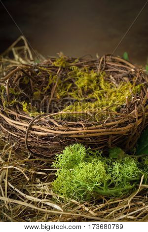 Empty bird's nest with moss and hay