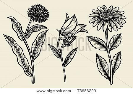 Set of Sketch wildflowers on a baige background. Hand drawn illustration. Vector