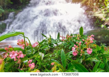 Beautiful Waterfall And Dragonflowers In Rainforest At Phu Tub Berk Mountain  Phetchabun, Thailand (