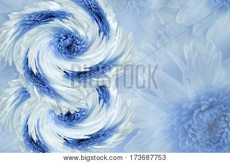 flowers on blurry white-blue background. Blue-white flowers chrysanthemum. floral collage. Flower composition. March 8. Nature.