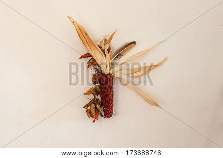 Rural still life, the cob dried red corn with a bundle of red pepper and chicken feather hanging on the bleached wall in the farmhouse. The composition is assembled by hand for raising crops