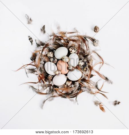 White brown Easter eggs quail eggs in nest decorated with feathers on white background. Flat lay top view. Traditional spring concept.