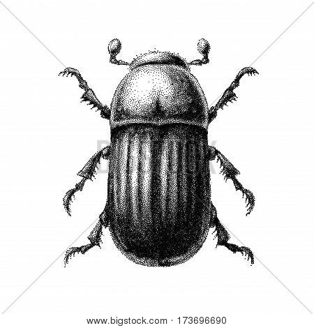 Black and white vector abstract beetle hand-drawn in the style of vintage etchings. Eps8. RGB Global colors