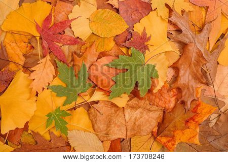 background made of fallen dried autumn leaves