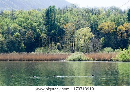 Lake Piano Reserve On Menaggio  Valley