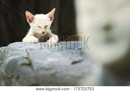 Cat Kitty Adorable Animal Concept
