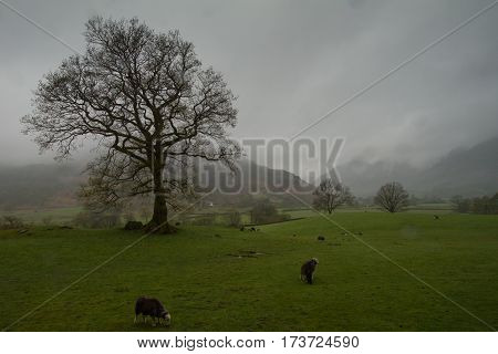 Great Langdale on a wild, wet and windy day