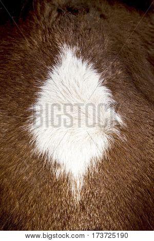 Detail Of Brown Horse Mane