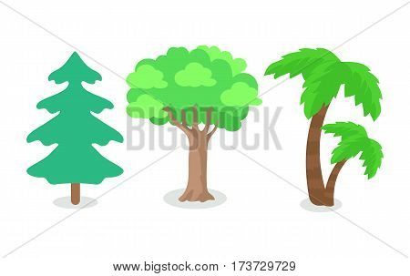 Trees of different continental zone isolated on white. Fir tree popular at north, oak tree at east and west, palm tree at south area. Set of plants icons. Tree with green leaves. Forest icon. Vector