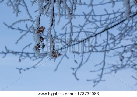 a frozen tres in winter white branches